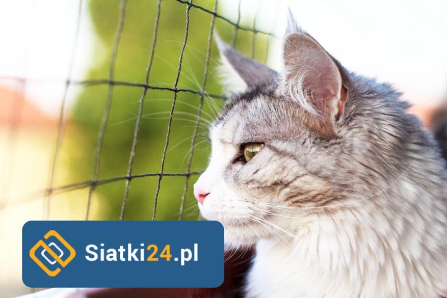 Siatka dla kota. Siatka zabezpieczająca dla kota